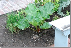 CorsonBuildingRhubarb